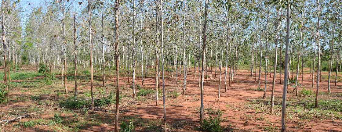 Plantación de árboles en Dzikunze, Kenia